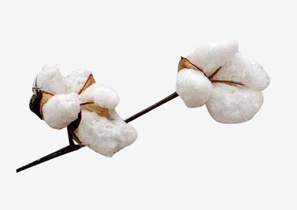 精梳棉是什么面料?精梳棉有什么优缺点