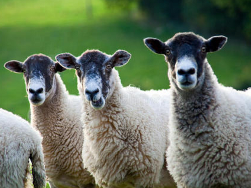 动物纤维面料有哪几种